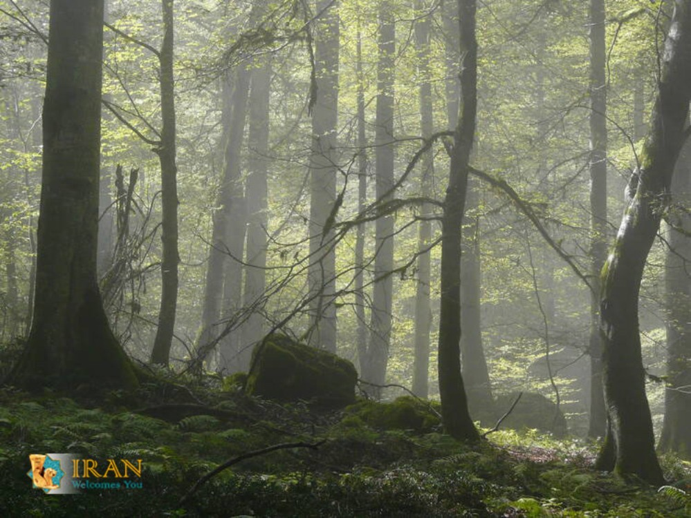 Hyrcanian forests,Hirkani Forest,Hirkani Jungle,CaspianSea,Iran,Unesco sites of iran